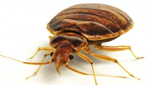 Say Good Bye to Bedbugs