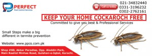 Cockaroch Treatment in Karachi by Perfect Pest Control Services copy