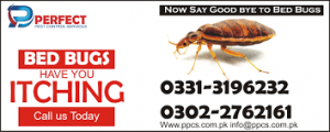 bed bugs fumigation in karachi